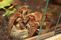Putovní výstava exotických pavouků z celého světa.