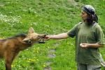 Zoo předvede komentovatné krmení zvířat.