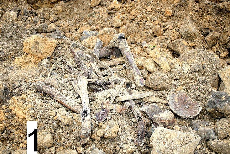 Po odkrytí zeminy narazili na kosterní ostatky a další předměty.