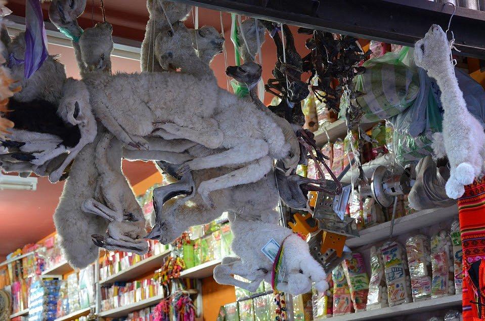 Čarodějnický trh - malé vyschlé alpaky