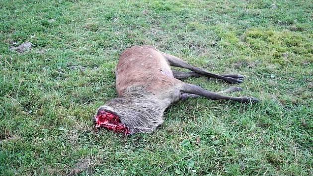 Další jelen přišel o hlavu