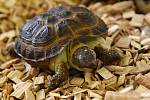 Zoo Děčín oslaví 23. května Světový den želv. Ilustrační foto.
