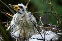 Ohrožené druhy ptáků v národním parku začínají hnízdit.