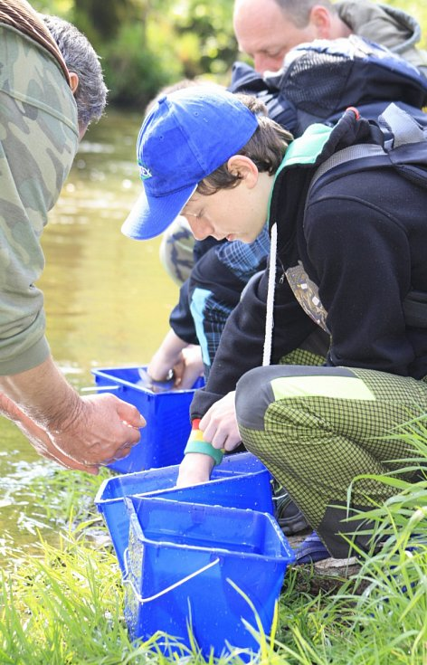 DĚTI VYPOUŠTĚLY lipany za pomoci rybářů do říčky Kamenice v Srbské Kamenici.