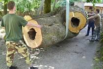 KMEN pro mravenečníky nainstalovala děčínská zoo.Kmen má úctyhodné rozměry –  váží totiž šest tun. Kmen je z 250 let staré lípy.