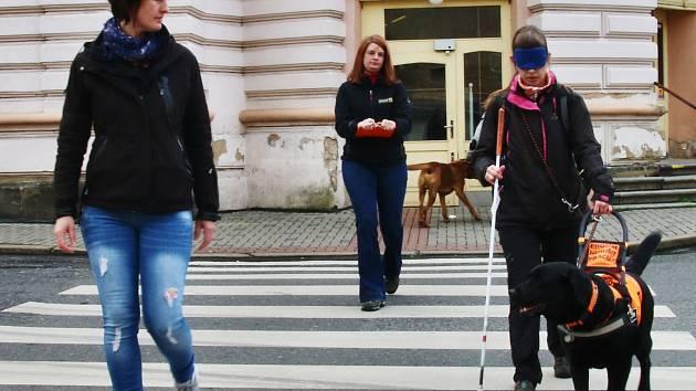 Závod vodících psů ve Varnsdorfu.