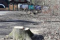 Kácení stromů u zoo.