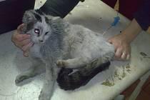 Týraná kočka, ilustrační foto.