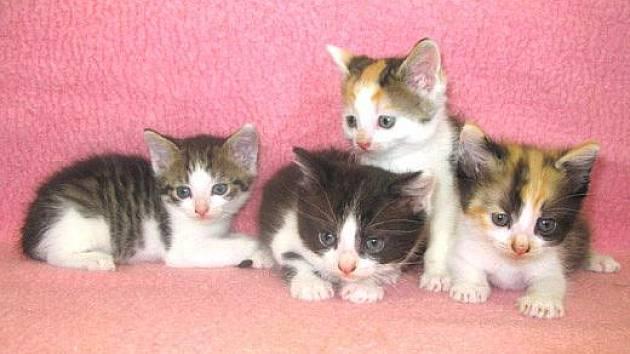 ŤAPÍK, CALISTA, ŽEMLIČKA a FUGAS jsou to malí mazánci, staří asi 6 týdnů.
