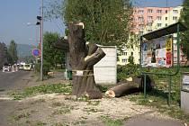 Stromy padly až po době vegetačního klidu