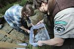 Do potoka Jetřichovické Bělé vypouštěli rybáři několik tisíc rybích plůdků lososa.