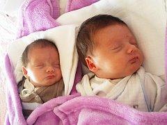 Terezie a Rozalie Mangoltovy se narodily Dominice Mangoltové 18. května v ústecké porodnici. Terezka: 10.17 hod., 39 cm a 1,38 kg; Rozálka: 10.16 hod., 41 cm a 1,62 kg.