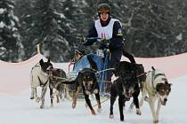 Na Sněžníku se opět proháněla psí spřežení