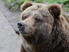 V Zoo Děčín uhynula Helga, poslední samice grizzlyho v ČR.