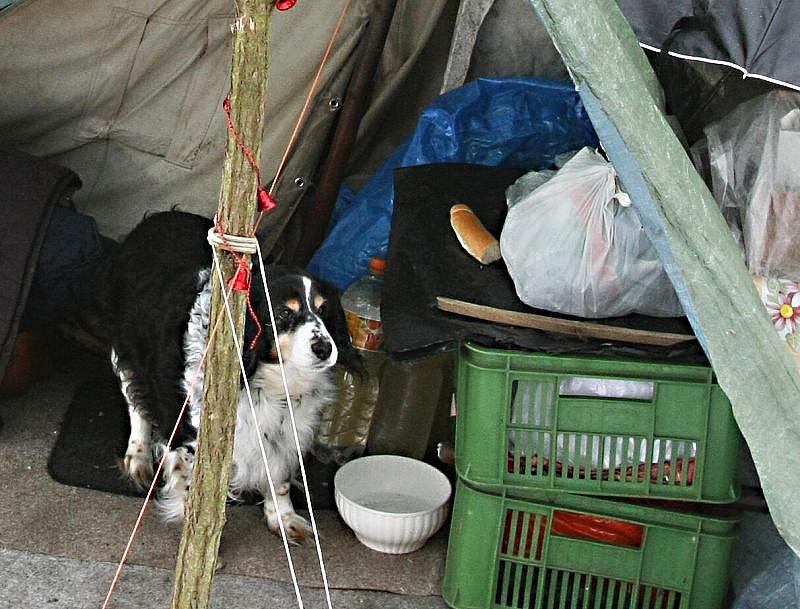 Bezdomovci Věra a Petr žijí ve stanu v zarostlé části mezi Předlicemi a Chabařovicemi více jak rok.