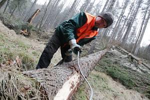 V Českém Švýcarsku padne 15 tisíc mrtvých stromů.