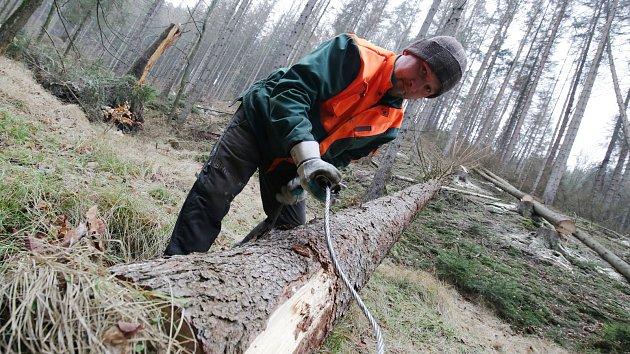 V Českém Švýcarsku padne 15 tisíc mrtvých stromů