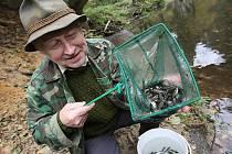 Do řeky Kamenice dnes vypustili 10.000 lososů, pomohli i dárci.