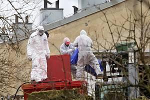 Likvidace chovu slepic kvůli salmonele v Janské nedaleko České Kamenice