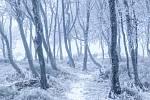 Zimní les.