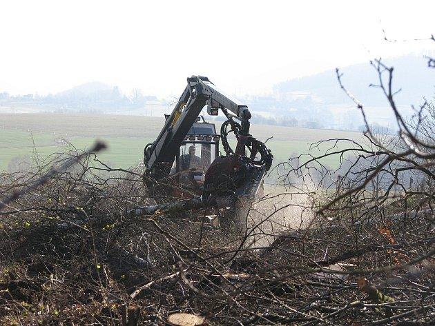 Průklest dřevin u Markvartic