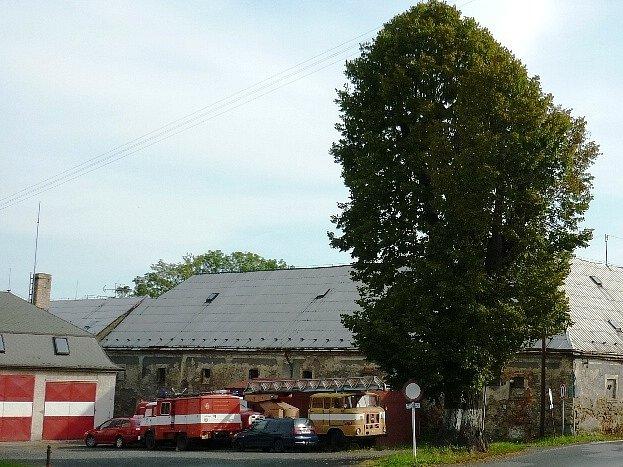 Nejstarším stromem ve Šluknově je přibližně dvousetletá lípa, která je posledním pozůstatkem na zámeckou alej.