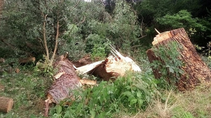 Mohutný strom se vyvrátil hned u hlavní silnice, poškodil chodník a odkryl i kabely v zemi.