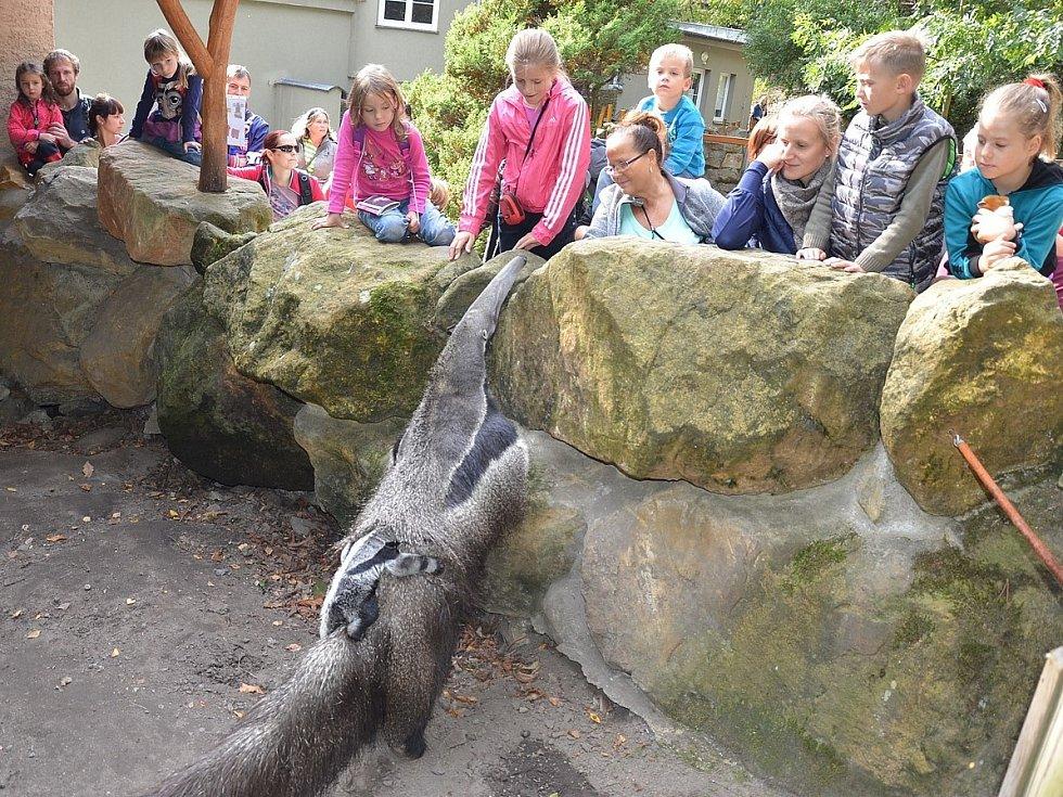 SOBOTA PATŘILA v zoo svátku zvířat.