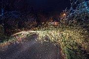 Hasiči v noci na středu odstraňovali spadlá strom v Děčínské ulici ve Varnsdorfu.