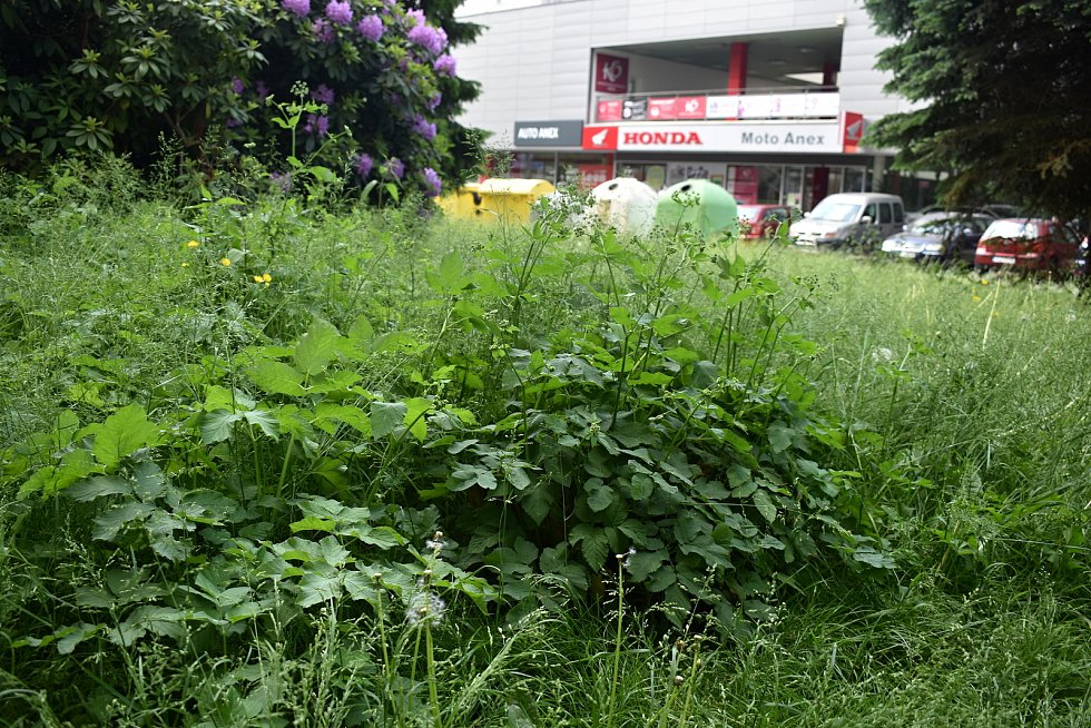 Přerostlá tráva v Děčíně na Starém Městě.