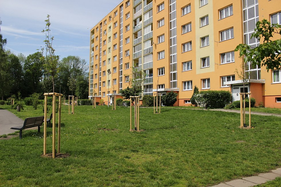 Obnova zeleně ve Varnsdorfu.