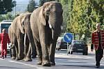 Sloni z cirkusu Humberto prošli městem Děčín.
