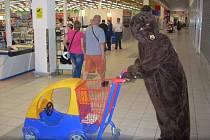 Vlastimil Chod v roli medvěda v děčínském supermarketu v roce 2014.
