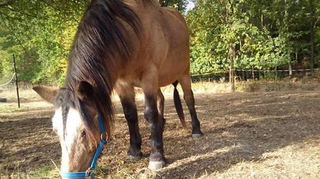 Hnědá klisna a žlutý poník se ztratili v Rumburku.