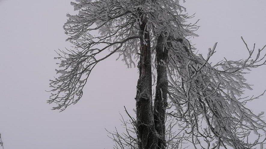 Na Sněžníku spadlo na silnici vlivem silné námrazy několik větví. S odklízením pomohli místní obyvatelé a hasiči.