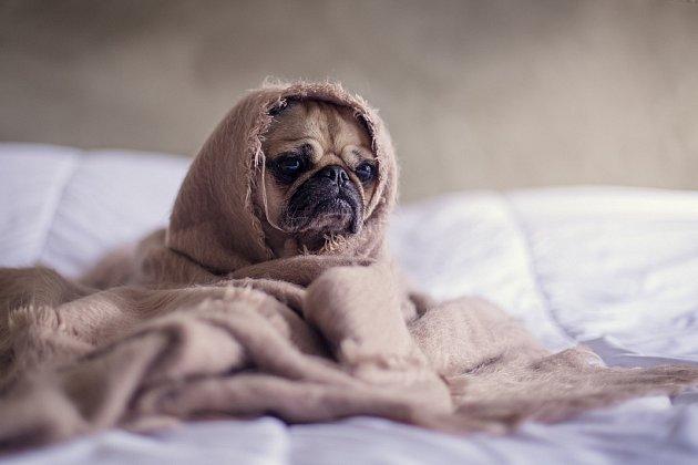 Nemocný pes.