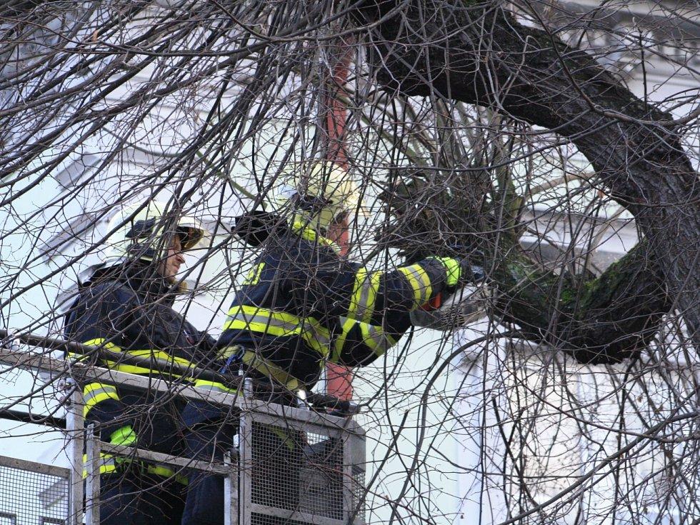 Vítr zlomil strom v Podmoklech v Děčíně.