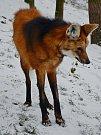 Zima v děčínské zoo.