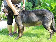 Oba psi jsou nyní v péči děčínského útulku.
