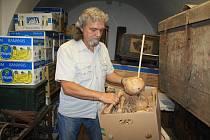 Ostatky jsou v současné době uložené v děčínském muzeu.