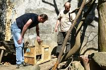 Ursony kanadské najdou návštěvníci v horní části děčínské zoologické zahrady, obývají expozici společně s psouny prériovými.