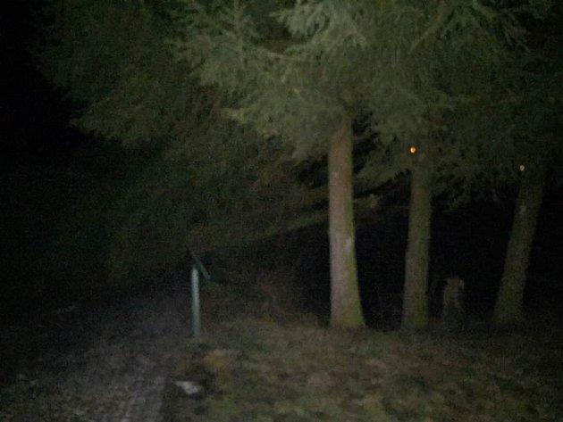 Několik stromů spadlo vzámeckém parku vBenešově nad Ploučnicí.