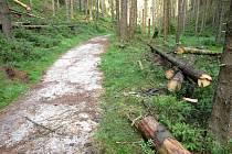 V národním parku padlo kolem stezek na tři sta stromů.