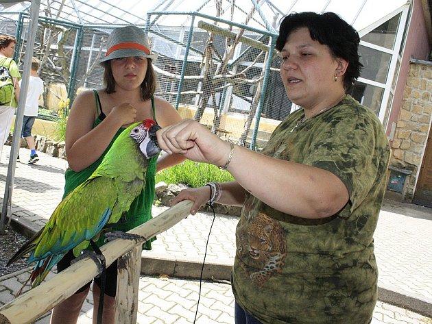 Papoušek Bobo v děčínské zoo.