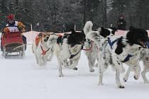 Na Sněžníku se opět budou prohánět psí spřežení.