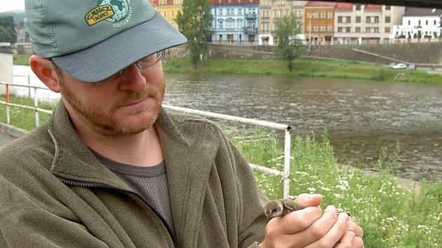 Na kroužkování mláďat břehulí říčních se podílel i Miloš Trýzna ze správy národního parku České Švýcarsko.