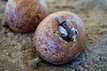 V Labských pískovcích mají za sebou další úspěšnou sezónu odchovu vzácných ptáků.