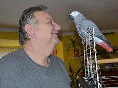 Pavel Juřička se může se Sárou pomazlit kdykoli, manželka Lenka už ale párkrát okusila bolestivé kousnutí ukecané papouščí samičky.
