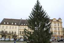 Vánoční strom na Masarykově náměstí v Děčíně, 2016.