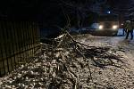 Spadlé stromy na Děčínsku.